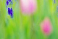 5月6日 今日の写真 - ainosatoブログ02