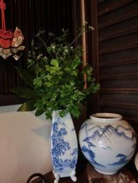 家のまわりの新緑を。 - 京都嵐山 着物レンタル&着付け「遊月」