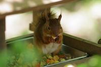 小動物 - akiy's  photo