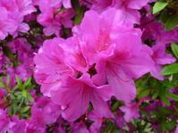 第一章:①花、開く - 倫子のフラワーエッセンス・カウンセリング(大阪)