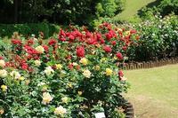 城山公園のバラ - つれづれ日記