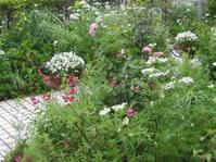 雨の庭 - 花の自由旋律