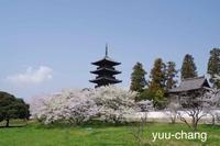 2018.4.2 備中国分寺 桜の木と五重の塔 - 下手糞PHOTO BLOG