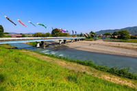 瀬戸川の鯉のぼり - やきつべふぉと