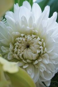 お休みの日の過ごし方 ^^。 - m-Flowers.