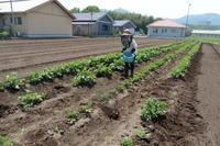 農作業1 - 天々USA日記