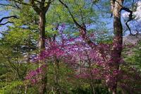 八紘嶺の春 - 山の花、町の花