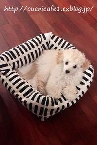 【ダイソー】100円ショップの座布団を組み合わせて手作り!簡単!おしゃれな北欧風愛犬用ベッドをDIY♪ - 10年後も好きな家