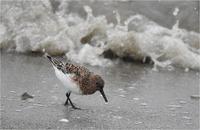 雨の浜辺 - 野鳥がいるから