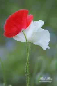 仲良し♪ - Flores*Flores