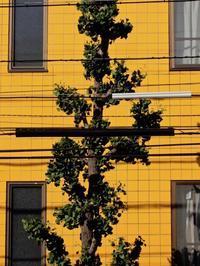 街路樹 - 四十八茶百鼠(1)