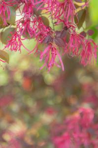 紅い花白い花 - 気ままにお散歩
