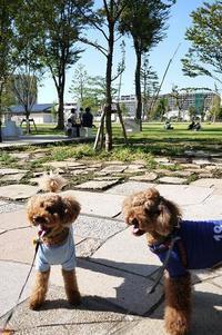 中野四季の森公園♪ - shoot !!