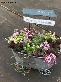 5月Oneday lesson 多肉植物の会 - さにべるスタッフblog     -Sunny Day's Garden-