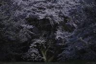 桜 - Now and Here