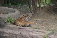 しっぽで仕事するカリ - 動物園へ行こう