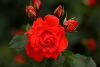 薔薇園にいってきました(*^^)v *Love supreme* - 静かな時間