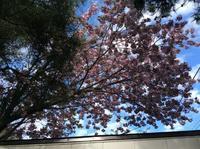 ゴールデンウィークも終わり     桜も🌸散ってきて、、、、 - ハンドメイド  Atelier   maki