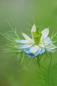 5月10日 晩春の庭 - 「あなたに似た花。」