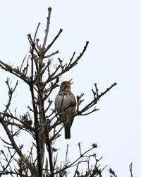 函館キャンプ関連最後の投稿です ^^; - 北の大地で野鳥ときどきフライフィッシング