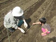 里芋植え付け、などなど - 南阿蘇 手づくり農園 菜の風