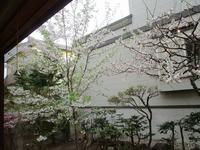 5月8日(火)・・・連休も終わって - ある喫茶店主の気ままな日記。
