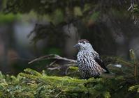 遠征 6 - 今日も鳥撮り