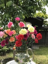 花農家からのカーネーション - 島暮らしのケセラセラ