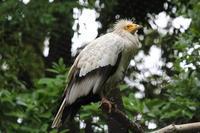 千葉市動物公園の珍しい鳥たち~エジプトハゲワシ、カラフトフクロウ - 続々・動物園ありマス。