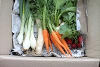 お野菜の配達をお願いしました。 - 普  段  着