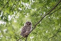 スッキリ‥ - 趣味の野鳥撮影