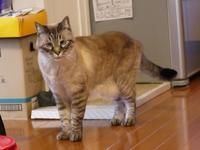 猫のお留守番 ギンくん編。 - ゆきねこ猫家族