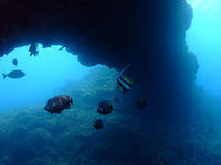 ウミコチョウ、集合しました~♪ - 八丈島ダイビングサービス カナロアへようこそ!