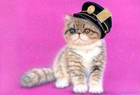 #リアリズム絵画[#萌獣] #駅長チックショートヘア:#メイキング - junya.blog(猫×犬)リアリズム絵画