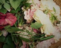 薔薇と映画と物思い - hibariの巣
