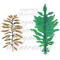 食材イラストレーション 海藻 大戸屋食育キャンペーン2018 - まゆみん MAYUMIN Illustration Arts