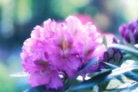 ここにしか咲かない花 - mur mur