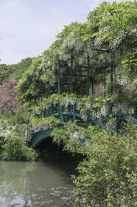 花咲く橋 - 気ままにお散歩