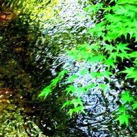 醍醐寺の水と花/伏見街道 - 鯵庵の京都事情