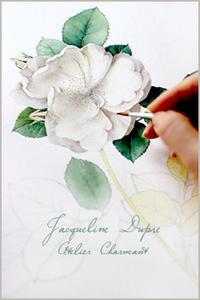 ジャクリーヌデュプレを描く - Atelier Charmant のボタニカル・水彩画ライフ