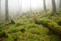 静寂の森楊枝ノ森 - 峰さんの山あるき