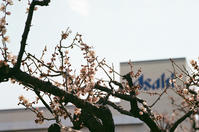 アサヒビール園の梅花とラム肩ロース - 照片画廊
