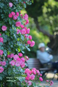 薔薇と休日と - 一瞬をみつめて