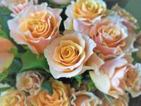 お花の御紹介 - HANATSUDOI