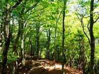 ヤマツツジ咲く栗の木岳 (1,077M) 登頂 編 - 風の便り