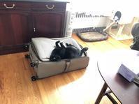スーツケースの上でヘソ天 - にゃんこと暮らす・アメリカ・アパート(その2)