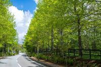清里新緑風景 - オーナーズブログ・八ケ岳南麓は晴れています!