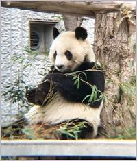王子動物園にも行ってみた - つれづれなるままに