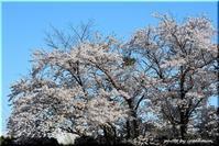 春の便り1(平岡樹芸センター) - 北海道photo一撮り旅