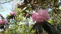 【比良・堂満岳】子どもの日は比良のお山にお花見ハイク - つれづれ山日記 biwaco mt.memory